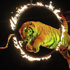 Цирки Первоуральска