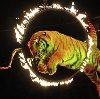 Цирки в Первоуральске